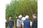 Field tour group at SRC poplar trial