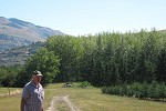 Kalamalka hybrid poplar spacing trial