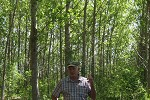 Kalamalka poplar spacing - Mike Carlson